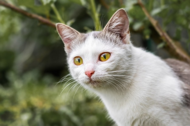 ぼやけた背景の庭にいる猫が獲物をじっと見つめています。狩りの猫