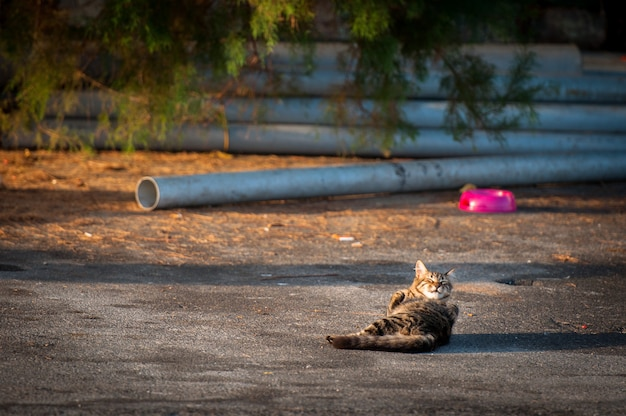 Кошка на солнце облизывает тротуар.