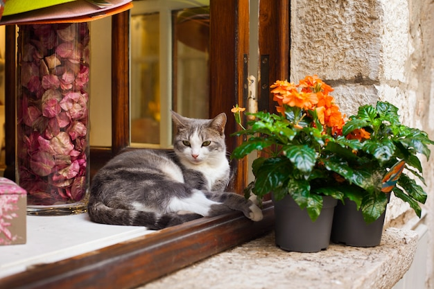 南フランスのサンポールドヴァンスの村の鍋の花の近くの窓に猫が横たわっています。