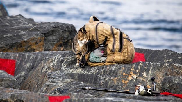 岩だらけの海岸の漁師のバックパックの近くの猫、前景の釣り竿