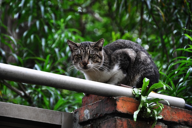 壁で遊ぶ猫、かわいいいたずら