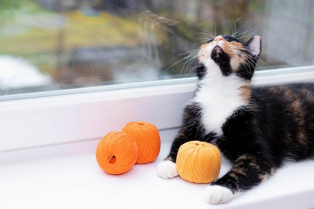 고양이가 실을 가지고 노는 게임 애완 동물 게임 뜨개질 용 실 고양 이용 광고 장난감 뜨개질 실의 광고 귀여운 고양이 사진 인쇄물 용 사진