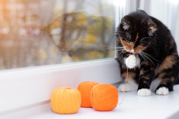 고양이는 실의 공을 가지고 노는. 애완 동물 게임. 뜨개질 스레드