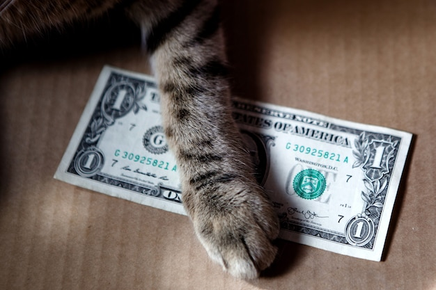 고양이 발은 판지 배경에 1달러를 들고 있습니다. 뇌물, 빈곤, 축적의 주제.