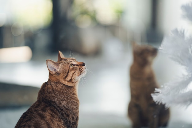 猫が何かを見上げて座っていて、その前に鏡がありました。