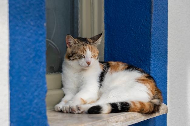 トルコのリゾートタウン、ボドルムの海の近くの窓辺に猫が座っています。閉じる