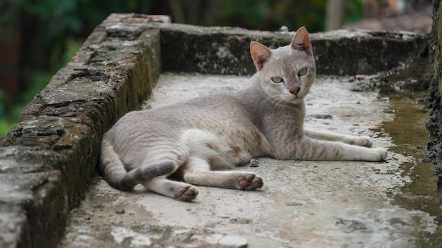 屋根の上に座っている猫