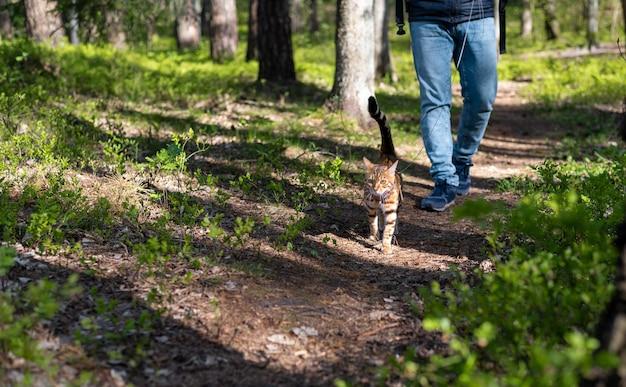 Кошка гуляет с мужчиной в лесу в солнечный летний день
