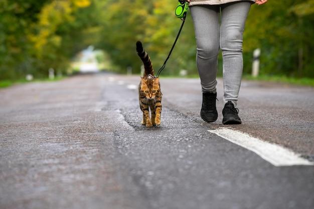 Кошка с задумчивым взглядом идет по дороге за городом в холодный осенний день.