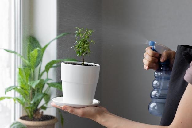白人またはヨーロッパ人の女性が家の花の世話をし、植物が花の葉を拭きます