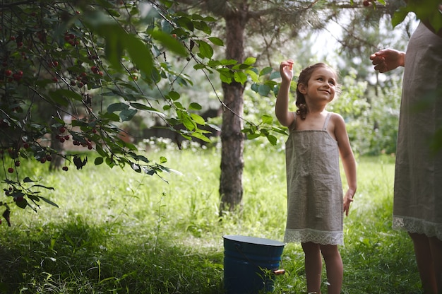 땋은 머리가 달린 린넨 드레스를 입은 매력적인 소녀가 정원에서 체리를 따며 어머니를 향해 상냥하게 웃고 있었습니다. 체리 수확.