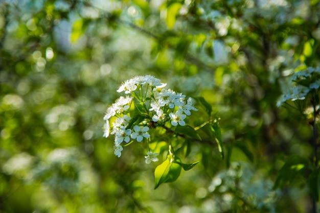 ぼやけた背景に花が散らばっている桜の枝。高品質の写真