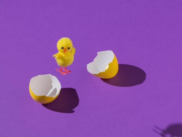 紫色の背景に分割卵から飛んでいる鶏。