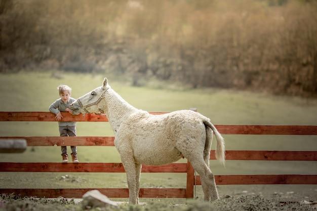 牧場の学齢期の少年が木製のフェンスに座って子馬に餌をやる子供