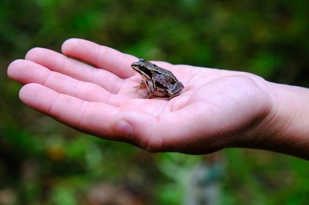 カエルを手に持った子供