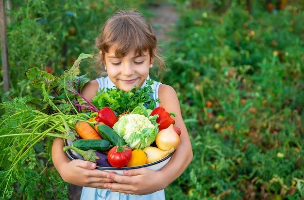 한 아이가 야채 수확을 손에 든다. 선택적 초점. 자연. 프리미엄 사진