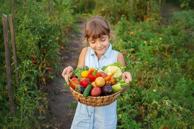한 아이가 야채 수확을 손에 든다. 선택적 초점. 자연.