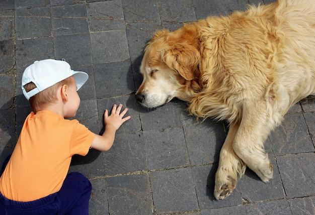 Ребенок, смотрящий на большую собаку, спящую