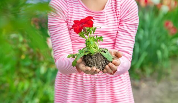 子供がフラワーガーデンを植えます。セレクティブフォーカス。
