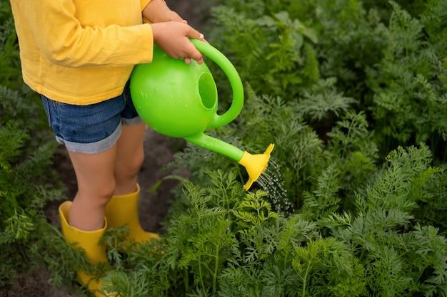 子供は小さな緑色のおもちゃのじょうろで庭のニンジンに水をまきます