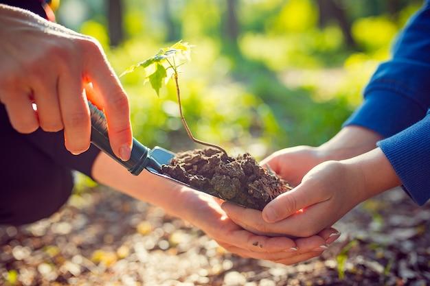 Ребенок с деревом, посаженным в руке, саженцами древесины и почвой в руке