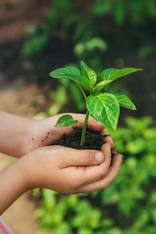 Ребенок с рассадой в руках в саду