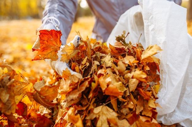 手袋をはめた手を拾い上げて、葉の山をバッグに積み上げている様子のクローズショット。公園で落ち葉を集める。黄色い葉の裏庭を掃除します。