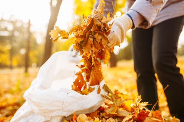 手袋をはめた手を拾い上げて、葉の山をバッグに積み上げている様子のクローズショット。公園で落ち葉を集める。黄色い葉の裏庭を掃除します。 Premium写真