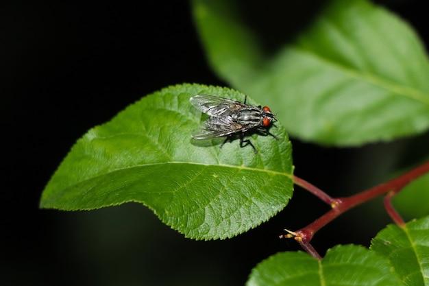 근접 파리는 녹색 잎에 나뭇가지에 앉는다. 배경이 매우 흐릿합니다.