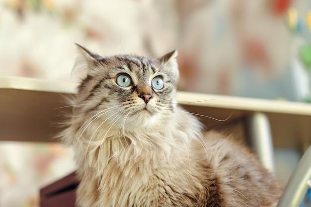 Крупный план кошки, которая смотрит в сторону и сидит возле кухонного стола.