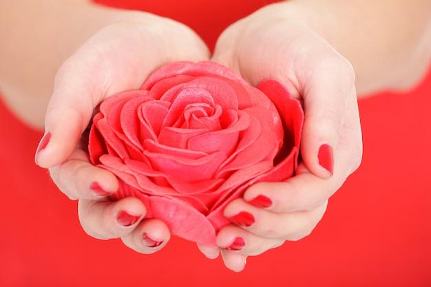 레드에 여성 손에 빨간 장미의 클로즈업