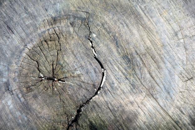 木の古いカット、木、テーブル、切り株、背景のテクスチャの古いカットの表面のクローズアップ