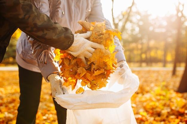 袋に落ちた黄色の葉を集めているボランティアのカップルのクローズアップショット。人々は公園で葉を掃除しています。