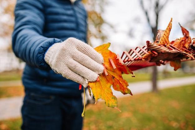 赤い熊手で葉を拾う手袋をはめた男のクローズアップショット。秋の風景。黄金の秋。寒い季節。