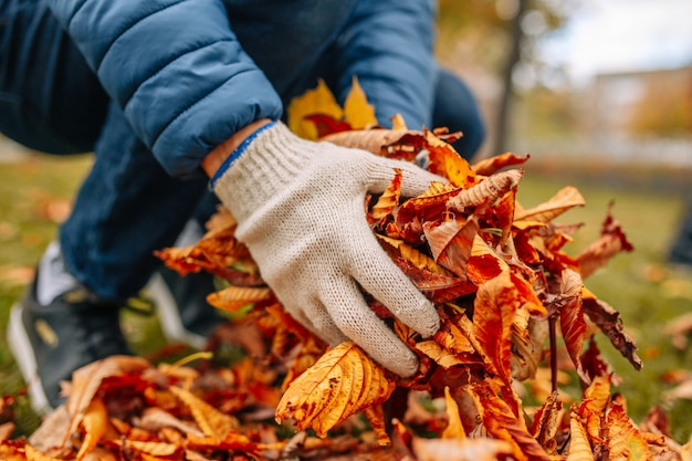 落ち葉を持っている男の手袋をはめた手のクローズアップショット。秋の庭の葉をきれいにします。
