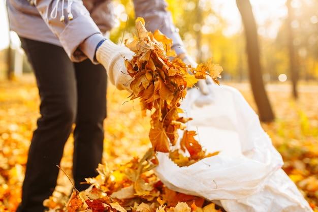 秋の公園や森で落ちた黄色とオレンジ色の葉の束を手に持っている女性のクローズアップショット。裏庭で落ち葉を掃除する女性。