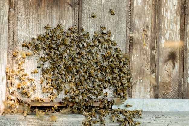 足のハイブに花粉を運ぶ働き蜂のクローズアップビュー