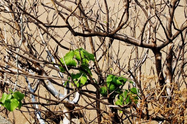 야생 나무 가지의 클로즈업 보기입니다.