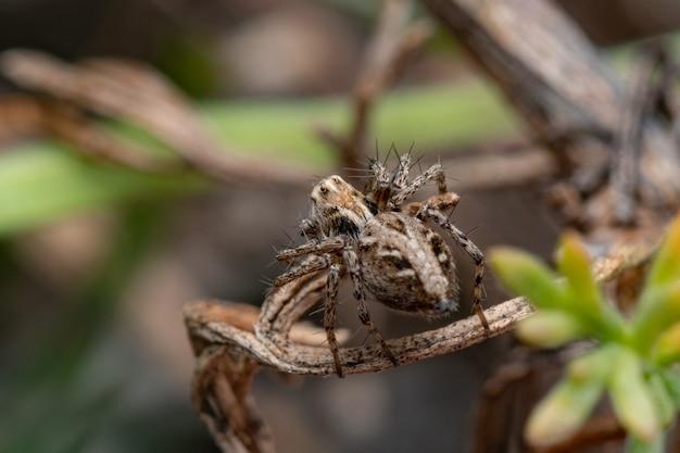 밀 꽃에 무서운 갈색 거미의 근접 촬영