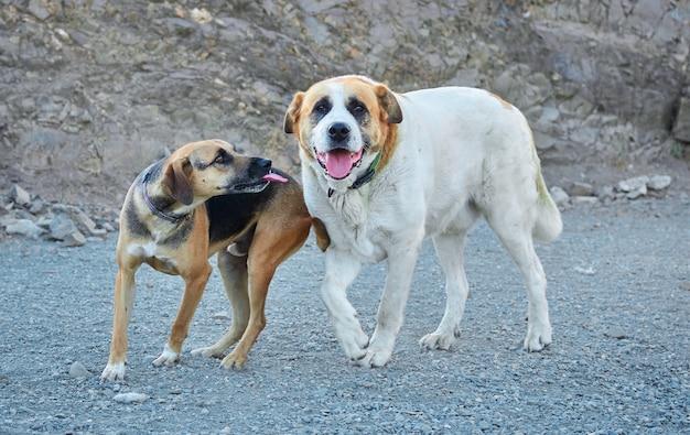 昼間に屋外で遊んでいる2匹の陽気な飼い犬のクローズアップ