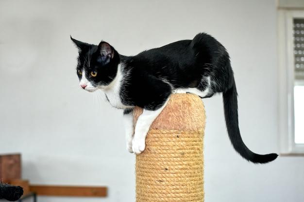 ロープで覆われたポールでバランスをとっている黒と白の猫のクローズアップショット