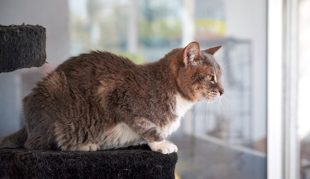 窓の近くに座っている美しい灰色の猫のクローズアップショット