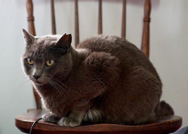 椅子に座っているかわいいふわふわ猫のクローズアップショット