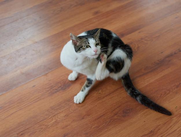 床に座って自分自身を引っ掻くかわいいふわふわ猫のクローズアップショット
