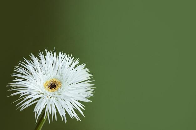 パステルグリーンの背景の美的構成上の白い花の静物のクローズアップショット