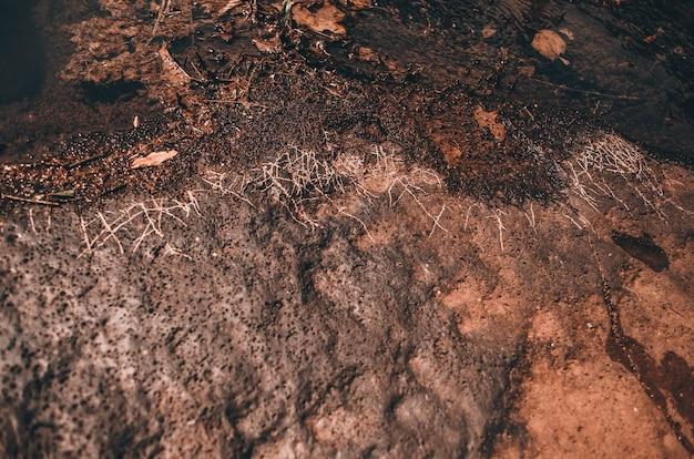 Снимок мокрой и покрытой мхом скалы крупным планом