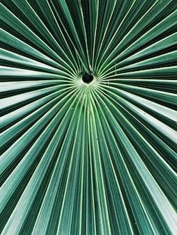 エキゾチックな熱帯の木のクローズアップショットを葉します。