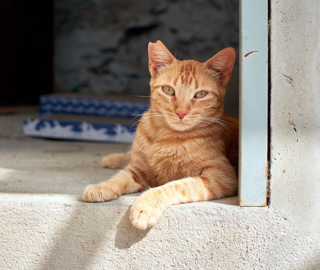 床に横たわっているオレンジ色の飼い猫のクローズアップショット