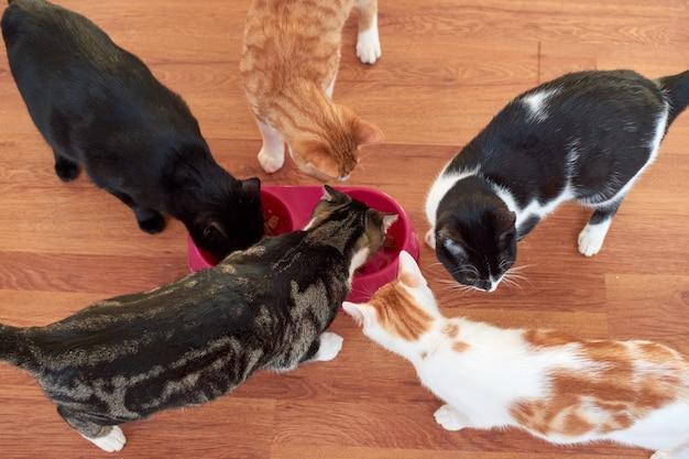Снимок крупным планом кошки, едящей из тарелки в помещении
