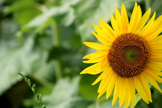 해바라기 꽃의 근접 촬영 보기